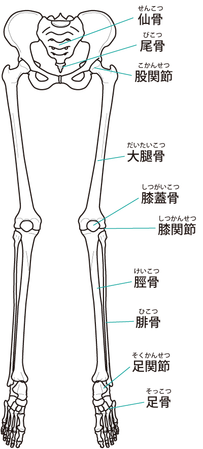 下肢の関節2